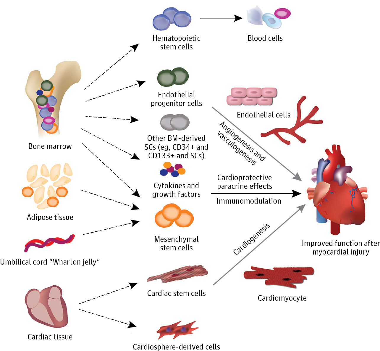 Adult Stem Cell Therapy And Heart Failure 2000 To 2016 A