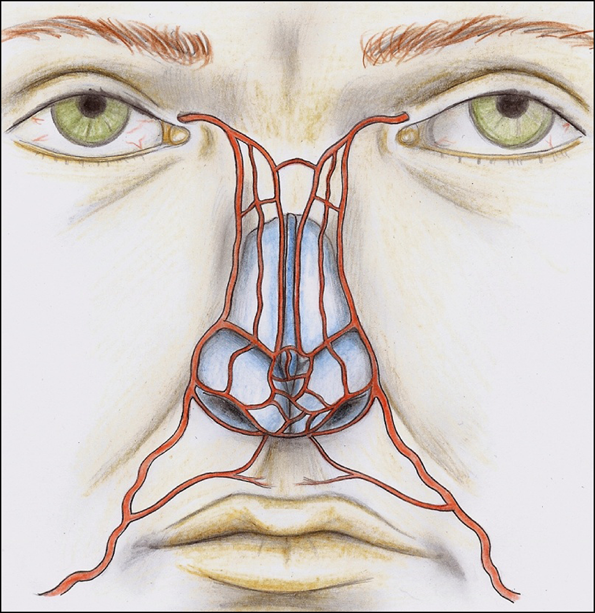 Nasal Arterial Vasculature Medical And Surgical Applications