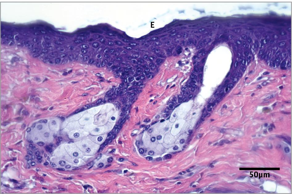 Ancillaries  Histology Consumables  Leica Biosystems