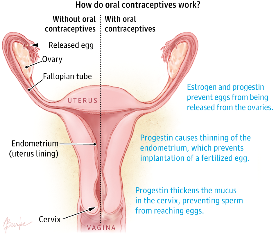 Oral Contraceptives Clinical Pharmacy And Pharmacology