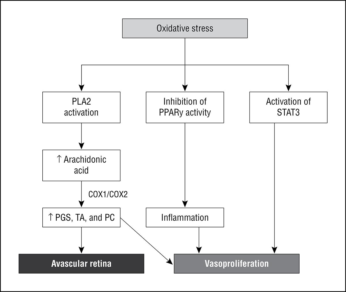 endothelial activation oxidative stress