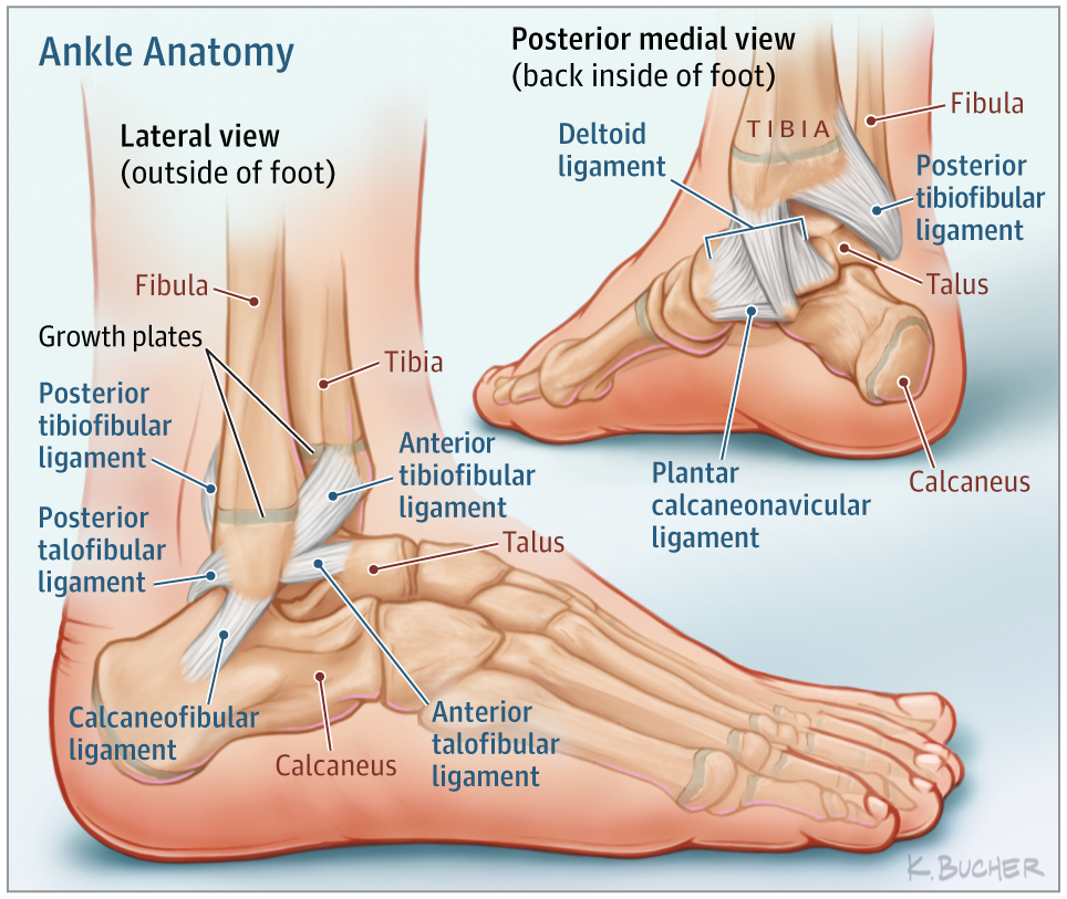 Ankle Sprains In Youth Sports Medicine Jama Pediatrics Jama