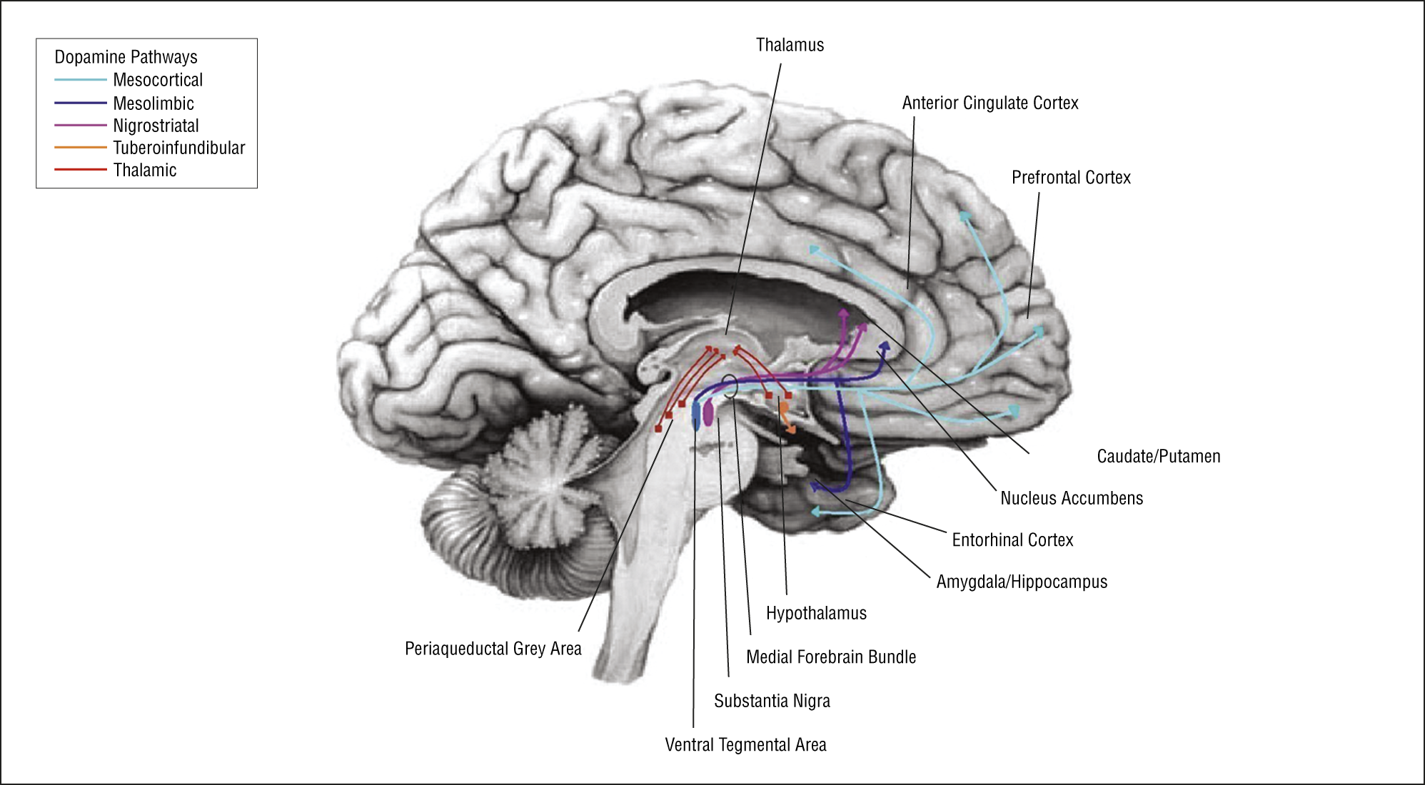 The Role Of Dopamine In The Pathophysiology Of Depression