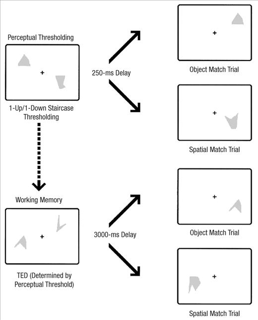 Visual Perceptual and Working Memory Impairments in